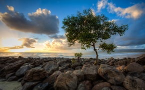 Picture sea, tree, clouds, the sky, stones, sunset
