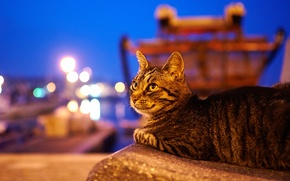 Picture cat, animals, cat, look, the city, lights, the evening, twilight, Wallpaper from lolita777