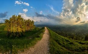 Picture landscape, Path, hill, pine