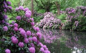 Picture trees, flowers, nature, pond, Park, shrub