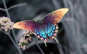 Picture flower, butterfly, insect