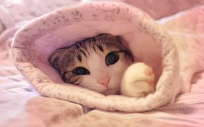 Picture cat, pink, cat