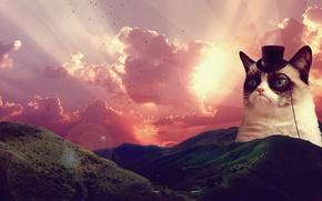 Picture landscape, sunrise, grumpy cat, sad cat