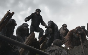 Picture monkey, Planet of the apes: the Revolution, Dawn of the Planet of the Apes, Caesar