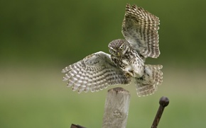 Picture landing, wings, bird, owl, metal, post
