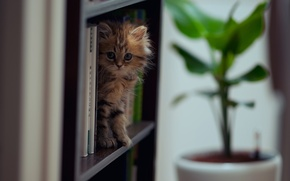 Picture cat, books, Daisy, © Ben Torode