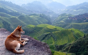 Picture hills, Asia, Red dog, terrace