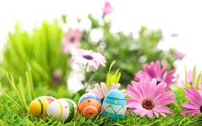Picture flowers, spring, Easter, flowers, Easter, eggs