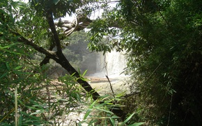 Picture forest, water, trees, waterfall, jungle