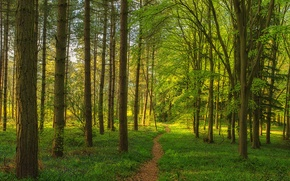 Picture forest, grass, trees, path