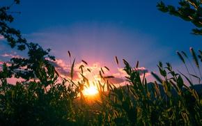 Picture Sunset, Nature, Grass, Nature, Grass, Sunset