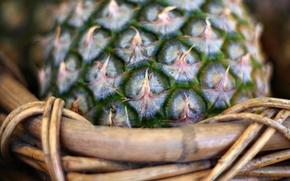 Picture macro, basket, pineapple