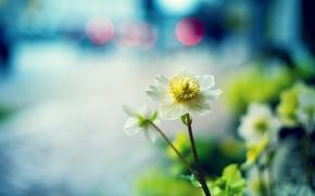 Picture macro, flowers, focus, white