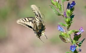 Picture flowers, butterfly, branch, swallowtail, in flight