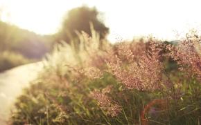 Picture road, grass, the sun