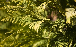 Picture leaves, green, shrub, bright green