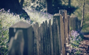 Picture macro, flowers, background, widescreen, Wallpaper, Board, the fence, fence, the fence, wallpaper, flowers, widescreen, background, …