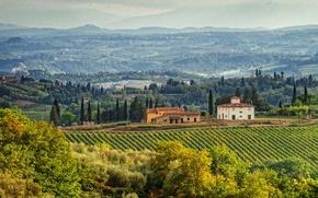 Picture trees, field, home, Italy, panorama, plantation, Tuscany, Tuscany