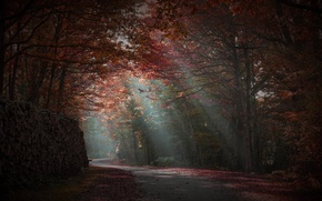 Picture road, autumn, forest, rays of light