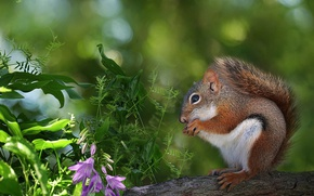Picture greens, grass, flowers, protein, bokeh, rodent