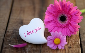 Picture flower, love, holiday, heart, love, flower, heart, gerbera, holiday, love you, gerbera