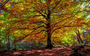 Picture autumn, forest, leaves, tree