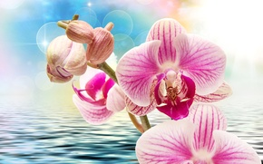 Wallpaper flowers, background, closeup, bokeh, water, ruffle, pink, glare, orchids