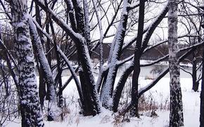 Picture winter, trees, Wallpaper, trunks, Background