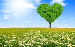 Picture field, tree, heart, chamomile, spring, meadow, love, sunshine, field, heart, tree, spring, meadow