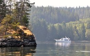 Picture forest, water, shore, yacht, boat in octopus islands