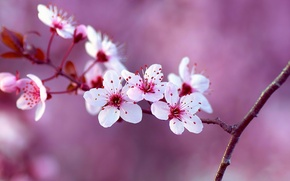 Picture flowers, nature, beauty, branch, spring