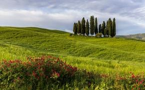 Picture field, landscape, tree