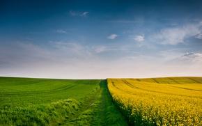 Wallpaper field, spike, wheat, field, yellow, yellow, autumn, clouds, cloud, green, the wind, spikelets, fields wallpapers, ...
