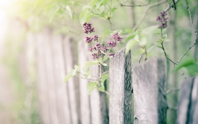 Picture nature, the fence, lilac