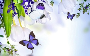 Picture water, flowers, collage, butterfly, plant
