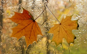 Picture autumn, leaves, window