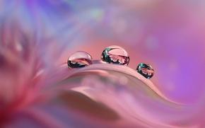 Wallpaper drops, reflection, pink, petal