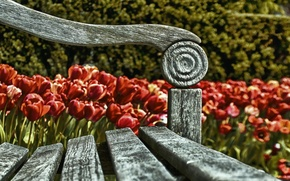 Picture flowers, background, bench