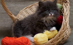 Picture kitty, basket, fluffy, thread