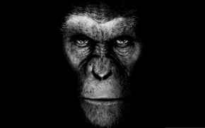 Wallpaper rise of the planet of the apes, black background, movie, the film, monkey, rise of ...