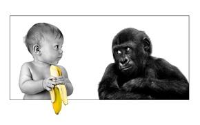 Picture friendship, gorilla, banana, the person