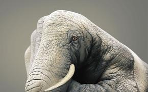Wallpaper figure, hand, Elephant