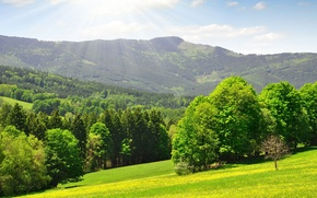Wallpaper Sunshine wood, the edge, Kingdom, green, mountains, day, trees, grass, warm, solar, forest