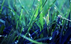Wallpaper macro, greens, Rosa, lawn, grass, drops