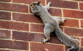 Picture wall, protein, tail, bricks, on the wall