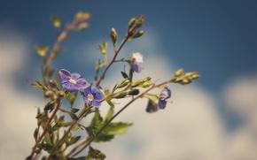 Picture flower, macro, sprig, photographer, Pasha Ivanov