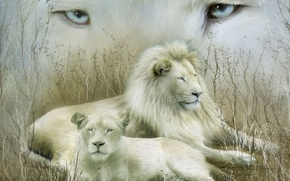 Picture look, family, white lions, couple. stay