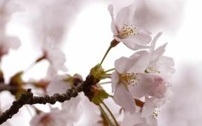 Wallpaper flowers, tree, spring
