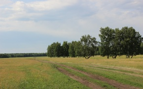 Picture road, the sky, grass, clouds, the steppe, Forest, Summer, birch