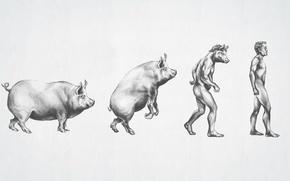 Picture figure, male, evolution